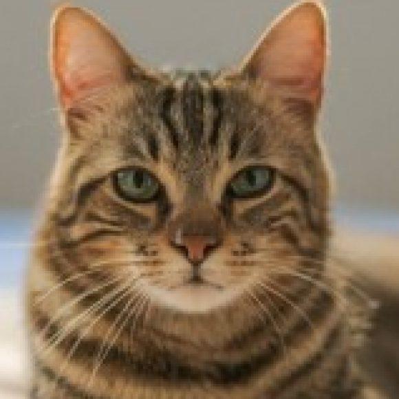 Profile photo of khalil